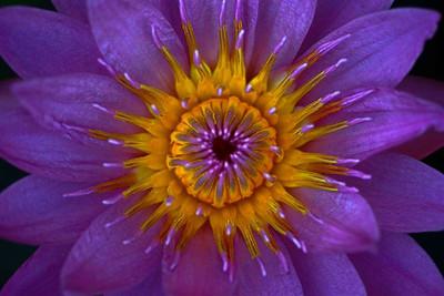 Firey Flower