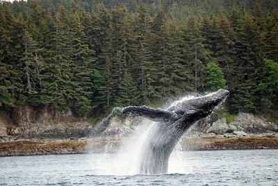 Praise God whale DSC_0486
