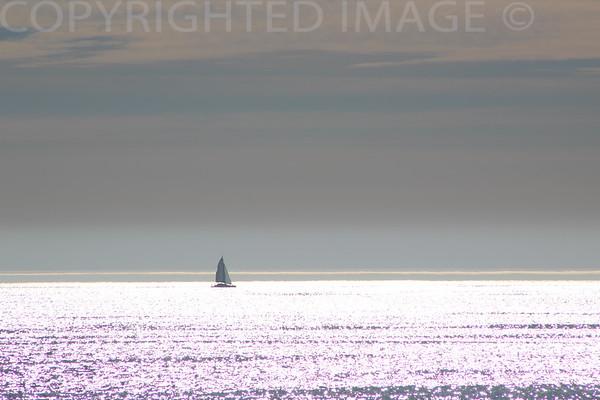 Purple Sailing