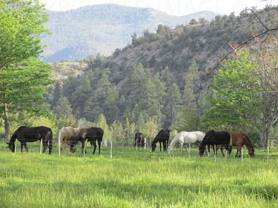 Happy Gila Horses