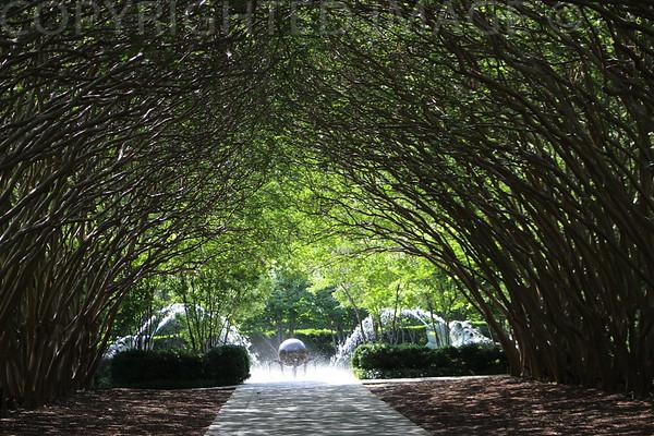 Tree Tunnel Awaits
