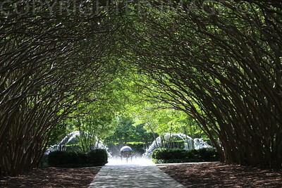 Tree Tunnel Awaits
