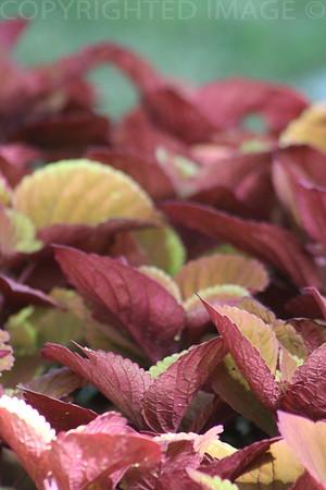 Leaves Adding Beauty