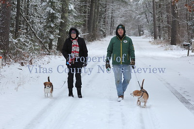 Walking Beagles