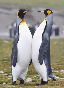 I Love Antarctica