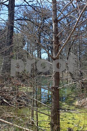 Tree Swamp