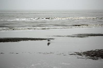 Gulf Watcher