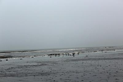 Surfing Seagulls