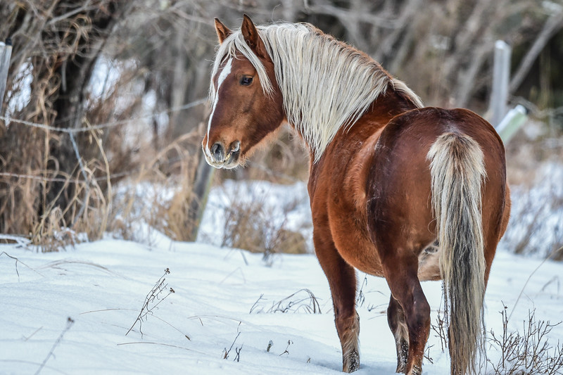 Phantom is this awesome looking stallion