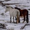 white spirit & mare