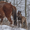 First New Foal for 2014