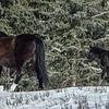 Mom & Foal #2, 2014