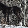 Foal #2, 2014