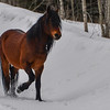 this is the stallion (father) of the 3rd foal