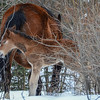 mom & 3rd foal of 2014 less than an hour after birth