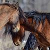 lead mare & young mare