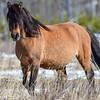 lead mare