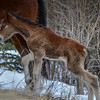 3rd new foal 2014