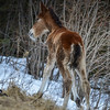 3rd new foal 2014 -pretty shaky trying to walks