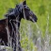 lone stallion