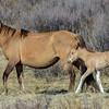 mom & foal