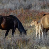 mom & foal with another mare