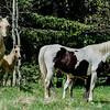 2 mares & 2 foals