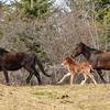 2 mares & foal
