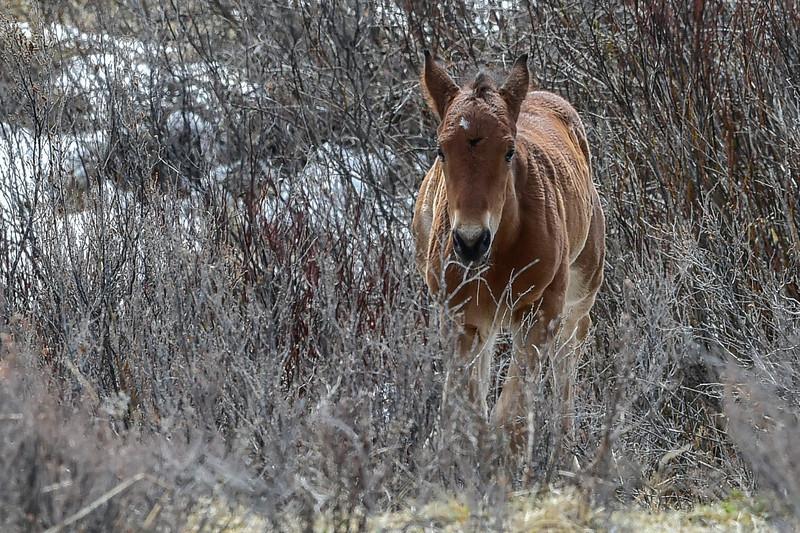 foal having fun