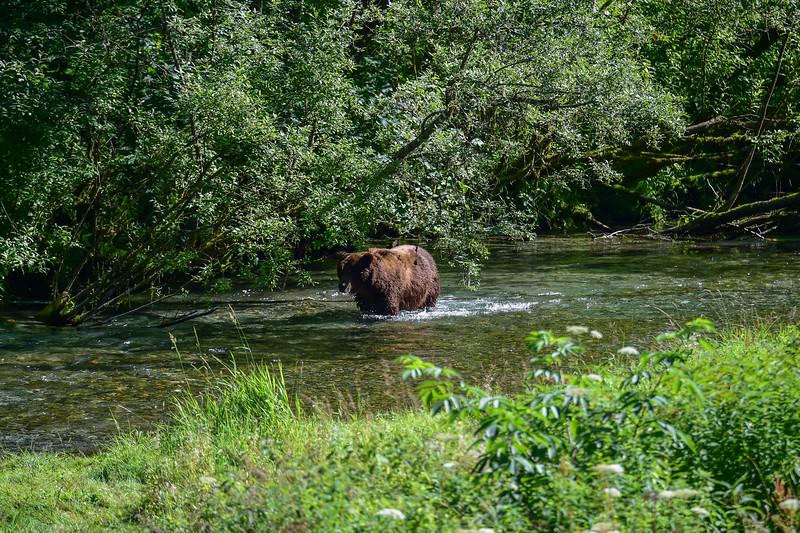 wondering up the creek