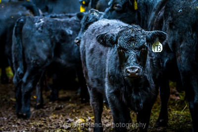 2014 Montoya Land and Cattle Company  Hesperus, Colorado