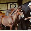 AHS 14 Wild Dance x Point of Grace colt 8795