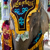 Elephant in novitiate procession