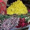 Flowers on the street of Mawlamyaing