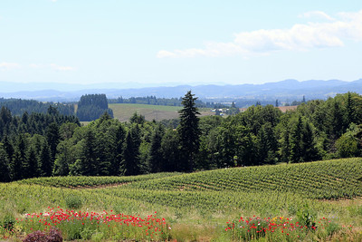 The Alexana Winery has some beautiful views too!