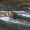 Little Applegate River, Jackson CG, RR NF, Oregon