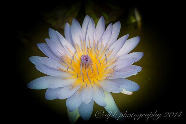 'Blue Beauty'