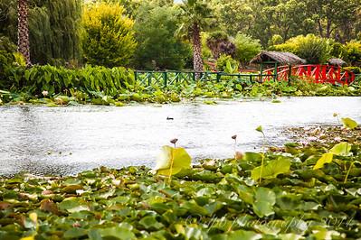 Watergarden Main Lake