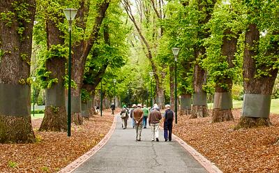 Avenue of English Elms ~ 2