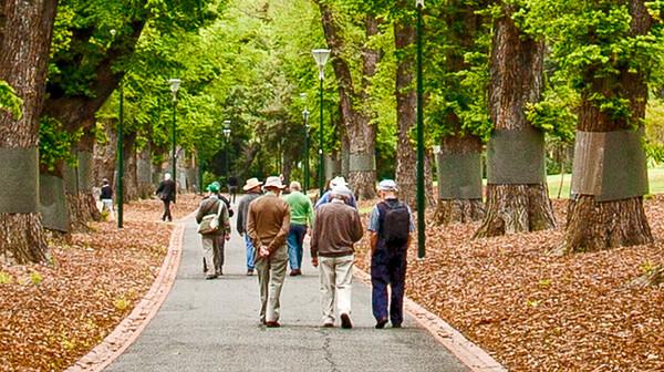 Avenue of English Elms ~ 3