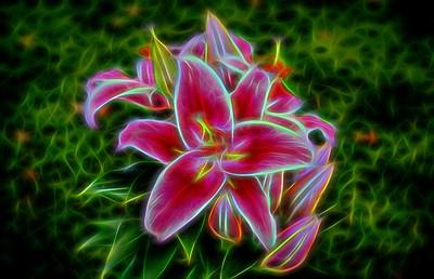 Dark Red & White Lilies