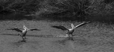 Pelican  Landings