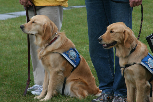 2013-09-15 K9 CSBarks in the Park - Carol Stream, Illinois