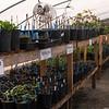 Master Gardener Practicum 2014