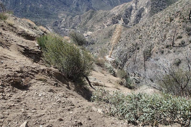 20140316049-Strawberry Peak Trailwork