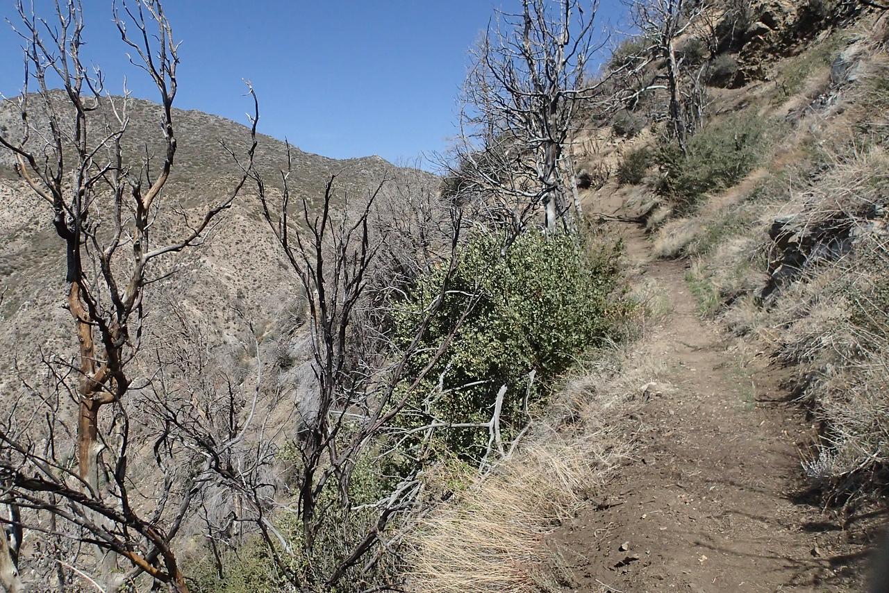 20140316025-Strawberry Peak Trailwork