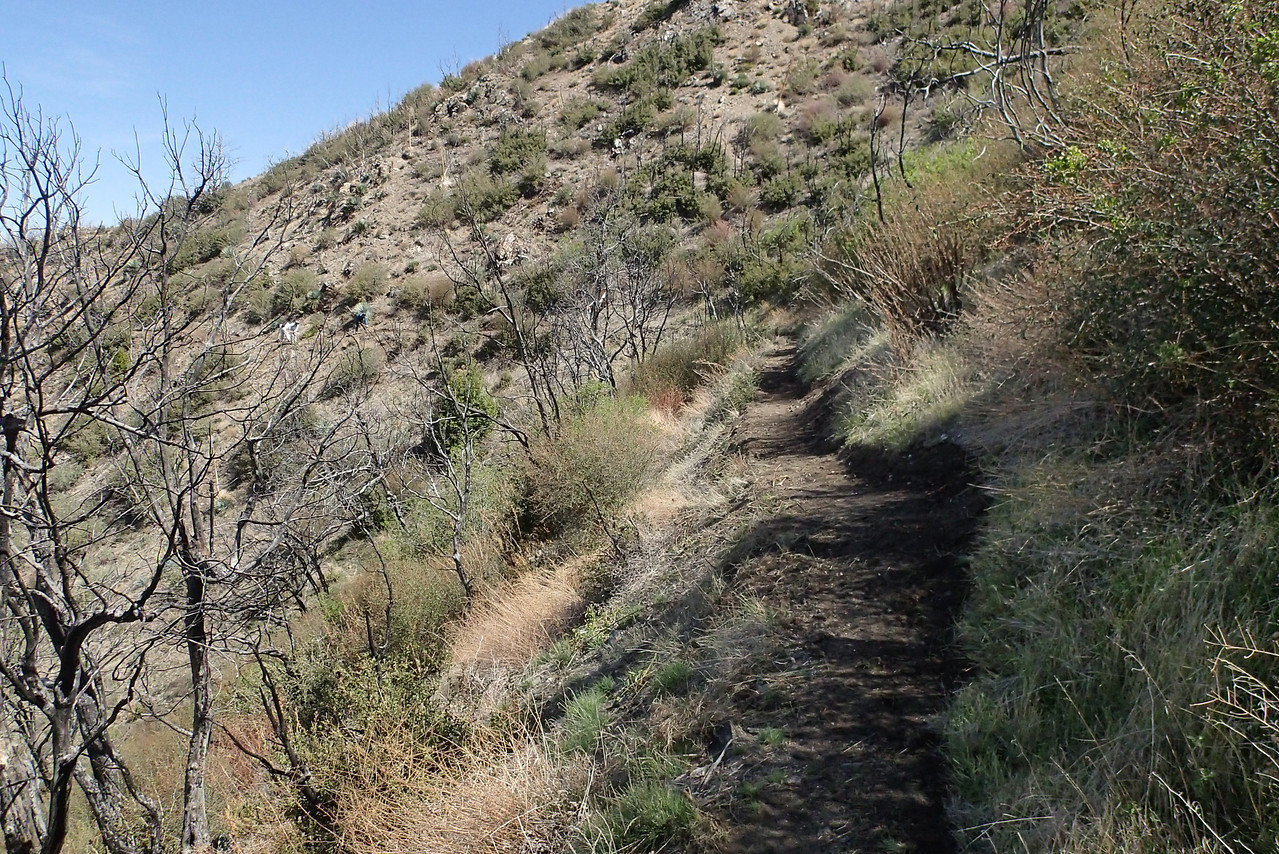 20140316008-Strawberry Peak Trailwork