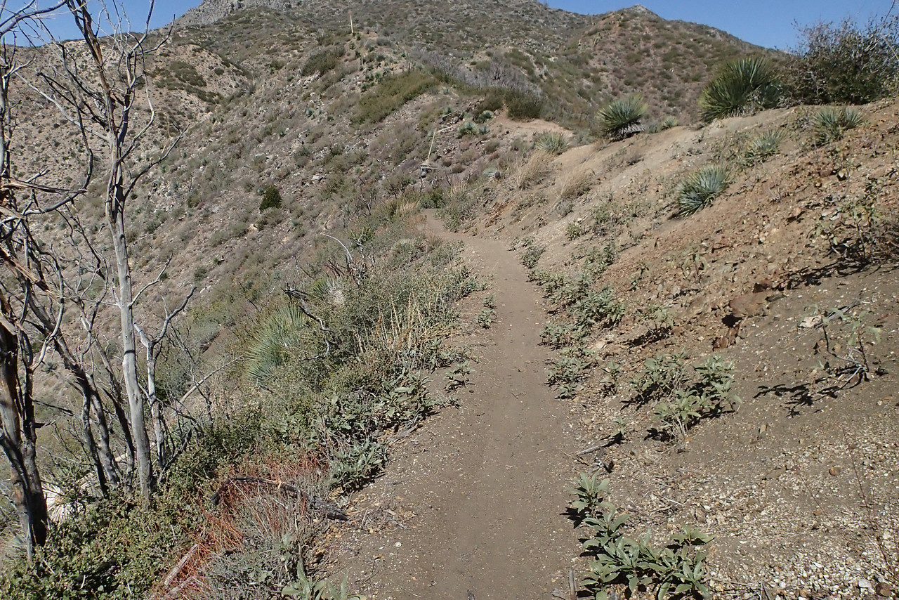 20140316012-Strawberry Peak Trailwork