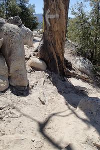 20140510008-Mount Hillyer Trailwork