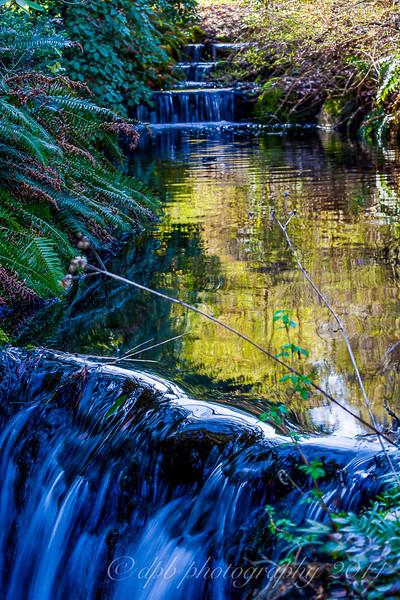 Stanley Park Creek